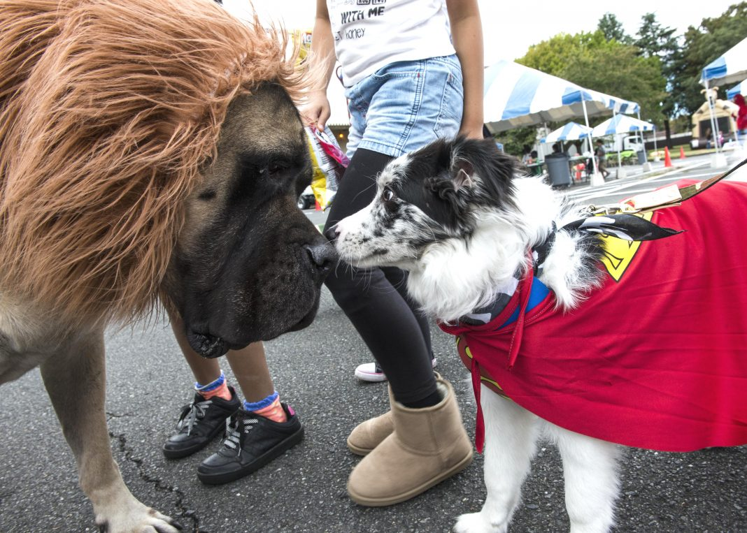 dogs in costumes sniffing noses